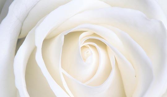 Botanical Beauty Professionals - PR en downloads